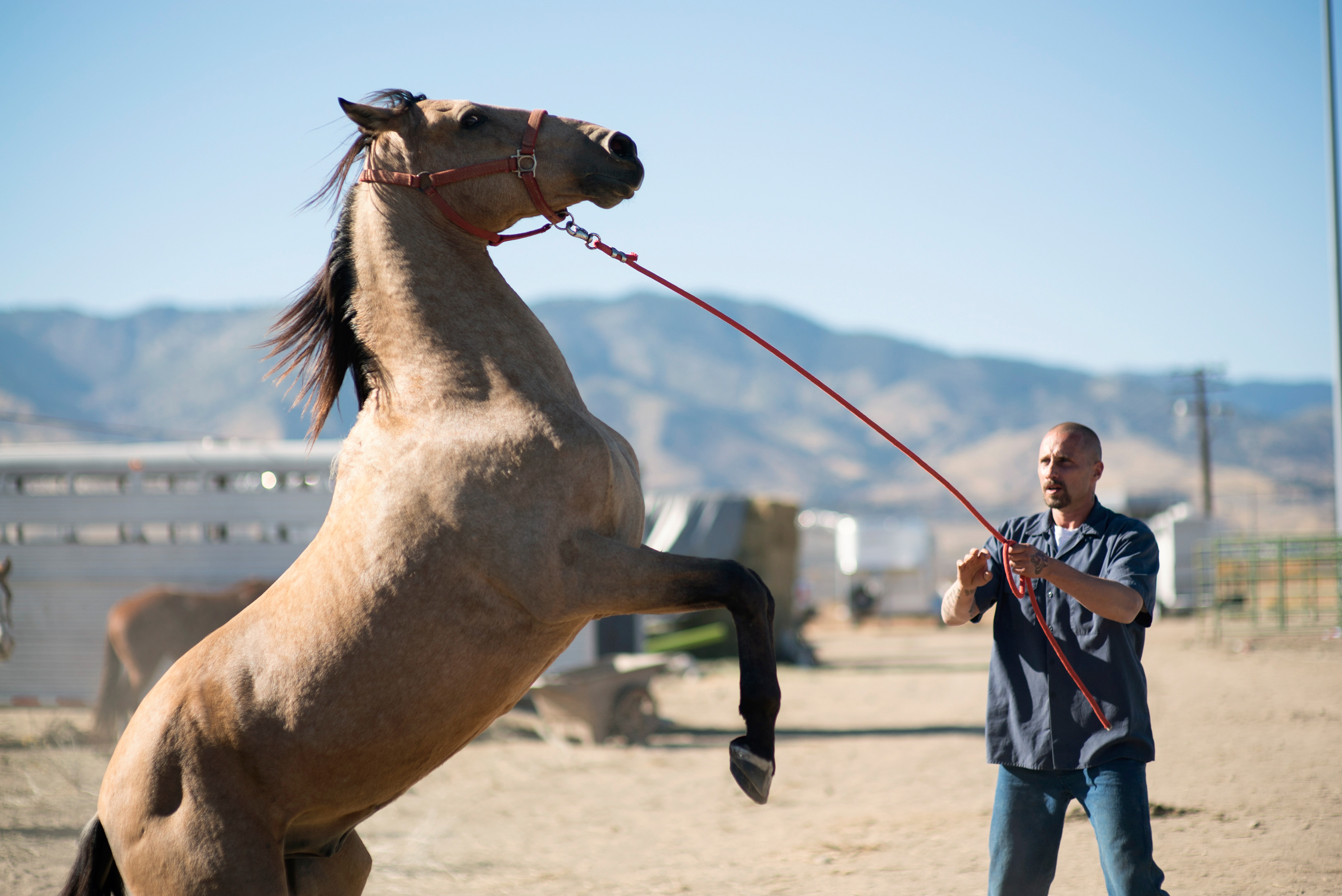 Sundance Film Review The Mustang Connects Wild Horse With Violent Man Splash Report